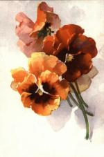 Pansy 03