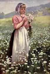 Wild flowers v 2