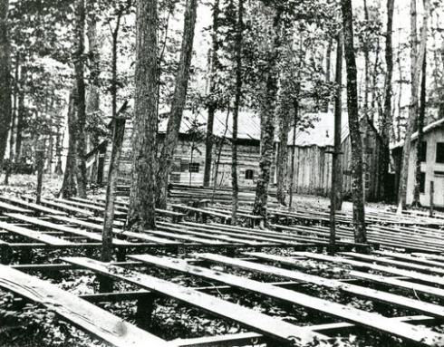 Blacdk and white photograph of several rows of flat plank wooden benches spaced outdoors among the trunks of tall trees.