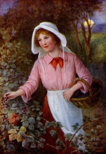 Woman picking blackberries 1905